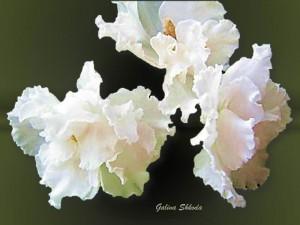 Galina Shkoda 28 на сайт