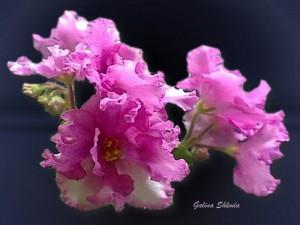 Galina Shkoda 29 на сайт