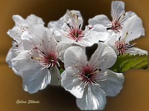Galina Shkoda 33 на сайт