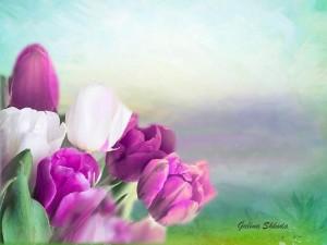 тюльпаны 8 — на сайт